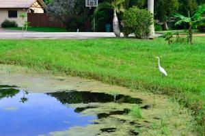 June 13, 2013- Florida z (83)